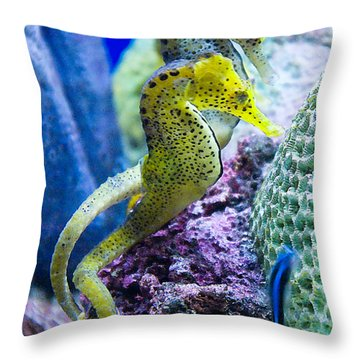 Colorful Seahorses Throw Pillow by Jim And Emily Bush
