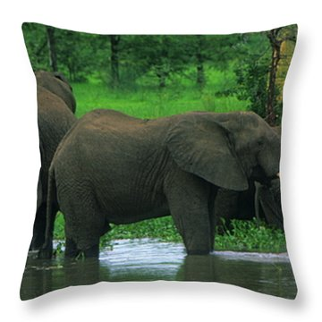 Elephant Shower Throw Pillow