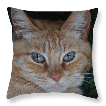 Fat Cats Of Ballard 5 Throw Pillow