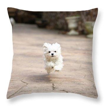 Dog Throw Pillows