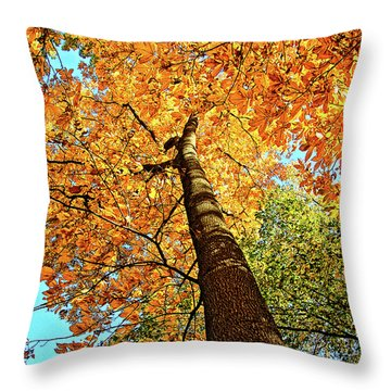 Golden Hickory Throw Pillow
