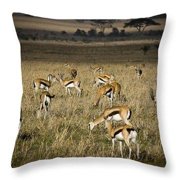 Herd Of Antelope Throw Pillow by Darcy Michaelchuk