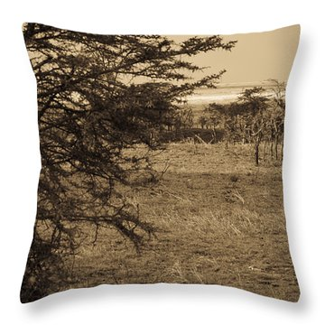 Male Lions Snoozing In Shade Throw Pillow by Darcy Michaelchuk