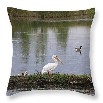 Pelican Reflection Throw Pillow by Alyce Taylor
