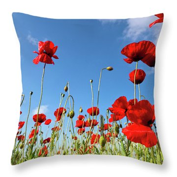 Poppies Season Throw Pillow