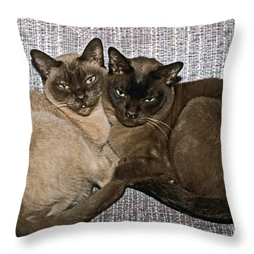 Tonkinese Pals Throw Pillow by Sally Weigand