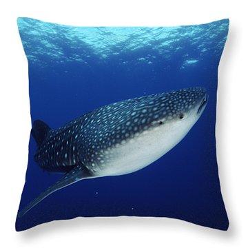 Whale Shark Rhincodon Typus Throw Pillow by Jurgen Freund