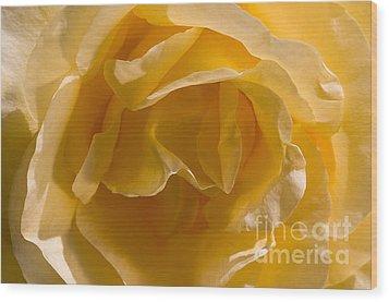 Yellow Rose Ruffles Wood Print