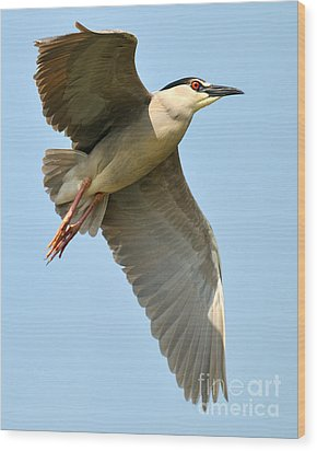 Black Crown Night Heron Wood Print