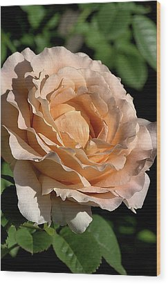 Wood Print featuring the photograph Orange Rose by Joy Watson
