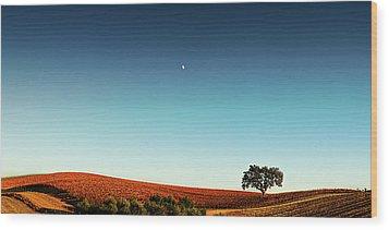 Vineyard Sky Panorama Wood Print by Larry Gerbrandt