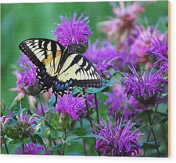 Swallowtail Butterfly  Wood Print by Lila Fisher-Wenzel