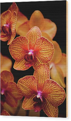 Deep Cut Orchid Society 15th Annual Orchid Show Wood Print by Dan Pfeffer