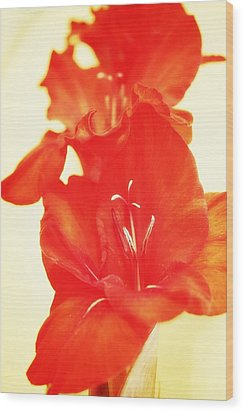 Gladiola Wood Print by Cathie Tyler