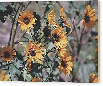 Wood Print featuring the photograph Arizona Sunflowers by Juls Adams