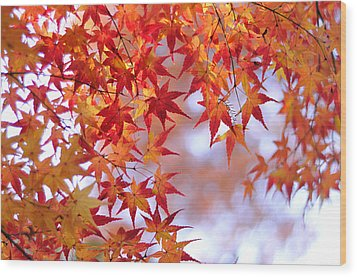 Autumn Leaves Wood Print by Myu-myu