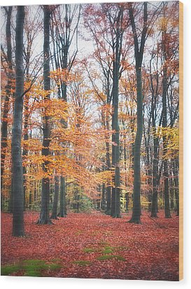 Autumn Whispers I Wood Print by Artecco Fine Art Photography