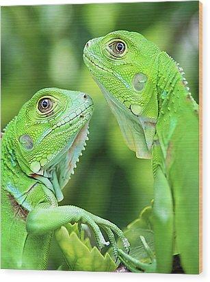 Baby Iguanas Wood Print by Patti Sullivan Schmidt