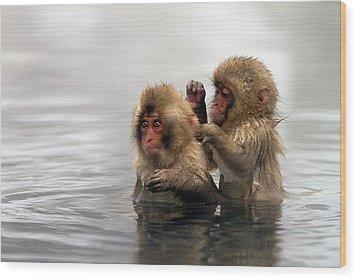 Baby Japanese Macaques snow Monkeys Wood Print by Oscar Tarneberg