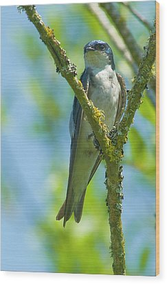 Wood Print featuring the photograph Bird In Tree by Rod Wiens