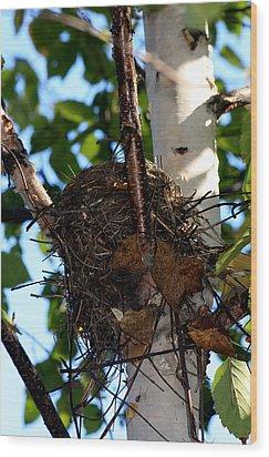Bird Nest In Birch Tree Wood Print by Marjorie Imbeau