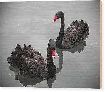 Black Swan Wood Print by Bert Kaufmann Photography