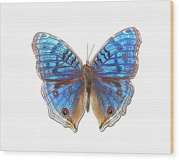 Brush-footed Butterfly Of Madagascar Wood Print by MajchrzakMorel