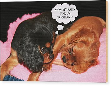 Cavalier King Charles Spaniel Let's Share Wood Print by Daphne Sampson