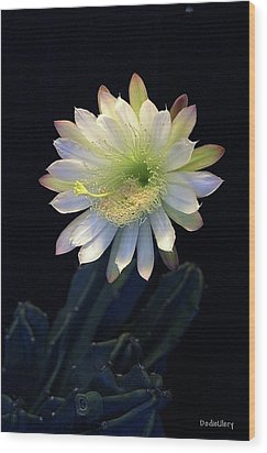 Cereus Peruvianus Wood Print by Dodie Ulery