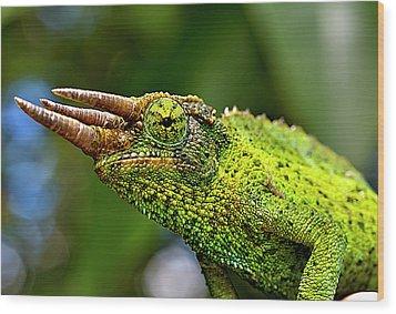 Chameleon Wood Print by Bill Adams - MomentsNow.com