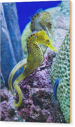 Colorful Seahorses Wood Print