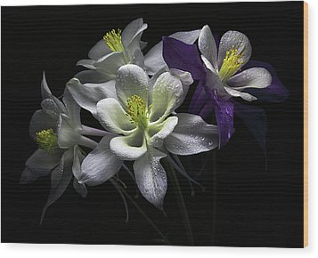 Columbine Flowers Wood Print by Flower photography by Viorica Maghetiu