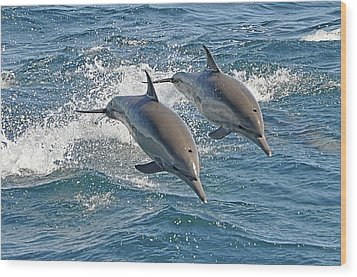 Common Dolphins Leaping Wood Print by Tim Melling
