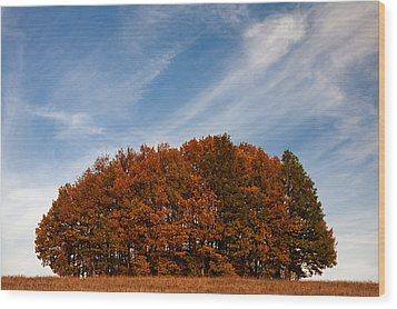 Compact Forest Wood Print by Evgeni Dinev