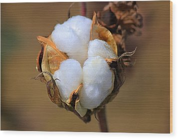 Cotton Boll Wood Print by Barry Jones