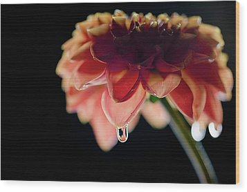 Wood Print featuring the photograph Dahlia And Drop by Stefan Nielsen