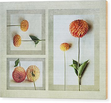 Wood Print featuring the photograph Dahlia Trip by Kevin Bergen