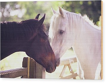 Dark Bay And Gray Horse Sniffing Each Other Wood Print by Sasha Bell