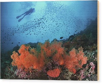 Diver And Soft Corals In Pescador Island Wood Print by Nature, underwater and art photos. www.Narchuk.com