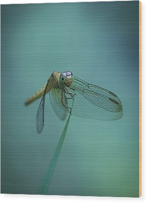 Dragonfly Wood Print by Zoe Ferrie