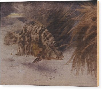 Example Of First Underwater Photography Wood Print by W. H. Longley And Charles Martin
