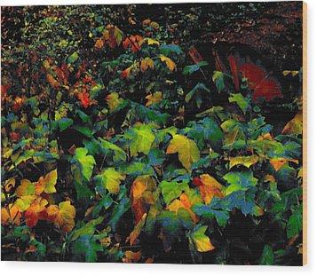 Fall Thimbleberry Wood Print by Anne Havard