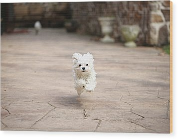 Flying Dog Wood Print by moments caught Photography
