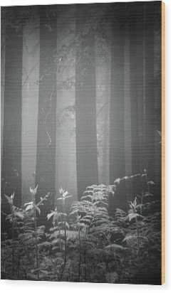 Fog And Ferns In Redwoods Forest Wood Print by Cathy Clark aka CLCsPics
