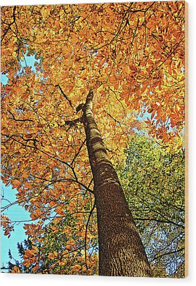 Golden Hickory Wood Print
