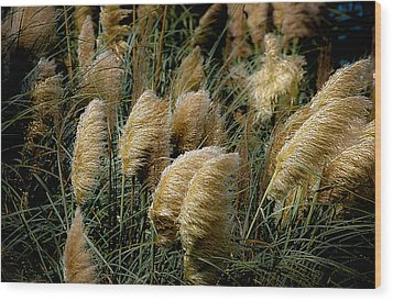 Golden Pampas In The Wind Wood Print by DigiArt Diaries by Vicky B Fuller
