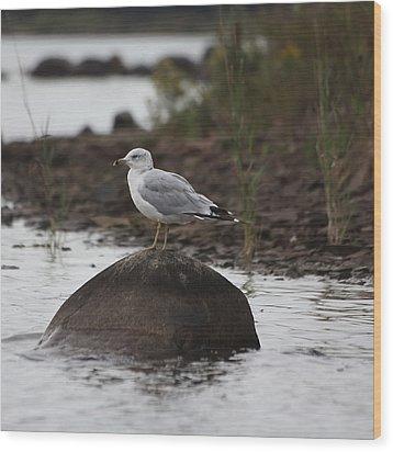 Gull On A Rock Wood Print by Marjorie Imbeau