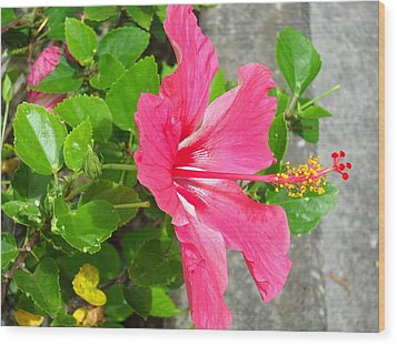 Wood Print featuring the photograph Hawaiian Pink Beauty by Yolanda Koh