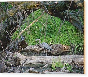Heron Habitat Wood Print by Sue Stefanowicz