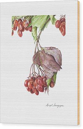Wood Print featuring the painting Highbush Cranberry  by Margit Sampogna